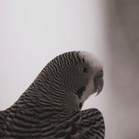 птиц :: Юлия Чорнявская