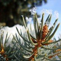 Прозрачные снежинки :: Лидия (naum.lidiya)