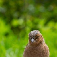 Птичка :: Alex Bush