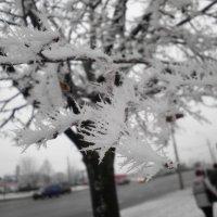 Зимняя шубка :: Александра Гай
