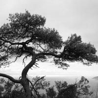 На Гибралтарской скале :: Анастасия Богатова
