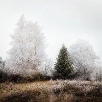 Деревенский пейзаж... :: Александр Никитинский