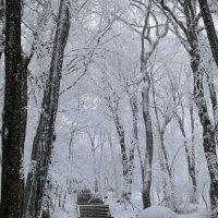зимний лес :: Мария Климова