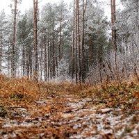 Первый снег. :: Анатолий Клепешнёв