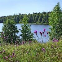 На берегу озера :: Валерий Талашов