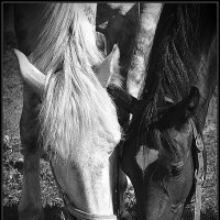 Год лошади :: Дмитрий Конев