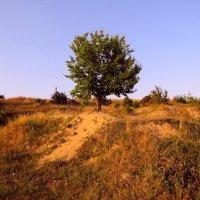 Одинокое деревце. :: Зоя Шевченко