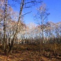 Осенний пейзаж .Утро. :: Мила Бовкун