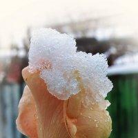 снег и роза :: Юрий Владимирович