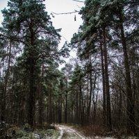 Дорога в лес :: Валентин Щербаков