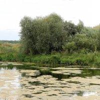 Монастырский пруд :: Александр Буянов