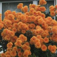 Цветы у дома :: Наталья Александрова
