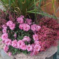 Ноябрьские цветы :: Наталья Александрова