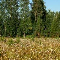 На лесной полянке. :: Galina S*