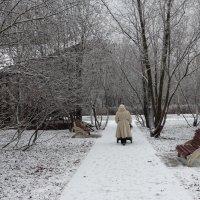 По первому снегу :: Svetlana27