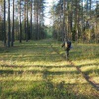 За лесными дарами. :: Андрей Синицын