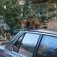 Мой сосед) :: Диана Мелина