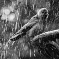 Птичка :: Ольга Бекетова