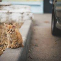 Рыжий кот :: Игорь Попов