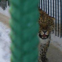 Большереченский зоопарк :: Savayr