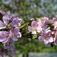 Весна :: Юлия Иная