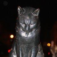 Так вот ты какой кот ученый.... :: Tatiana Markova