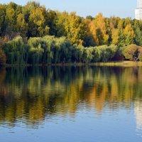 Солнечный осенний день в парке :: Ольга Русанова (olg-rusanowa2010)