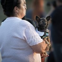 Дама с собачкой ... :: Vadim77755 Коркин