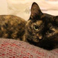 Кошка :: Валерия Лидерман
