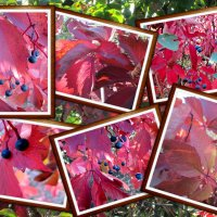 Багряные краски осени... :: Тамара (st.tamara)