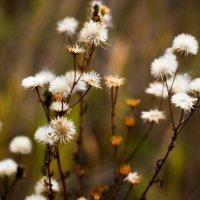 И вот осенние цветы, как островочек красоты, который в холод согревает и взгляд чарует и ласкает... :: Olga Vitman
