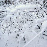 белая зима :: Людмила Романова