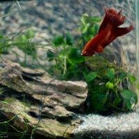 Рыбы :: Татьяна Ширякова