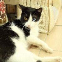 Такой вот необычный кот :: Андрей Щукин
