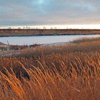 Северодвинск. Река Кудьма. Золотая осень :: Владимир Шибинский