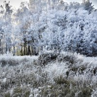 Зимняя сказка :: Мария Богуславская