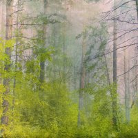 туман :: Алексей Карташев