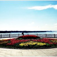 Городские цветы (6). :: Владимир Валов