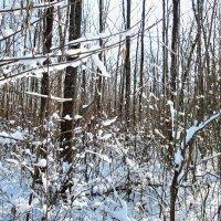 Снегом замело... :: Тамара (st.tamara)