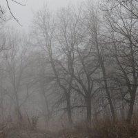Исчезновение :: Анастасия Базарова
