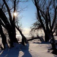Мороз и солнце :: Dr. Olver  ( ОлегЪ )