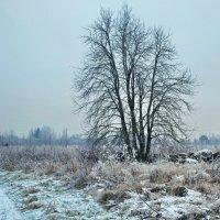 седина ноября :: Светлана