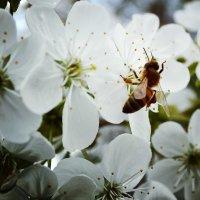 весна :: Мария Мухина