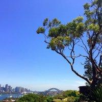 Австралия. Сидней. :: Люда Валяшки