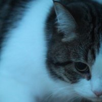 Meow :: Анна Чёрная