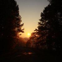 Закат над лесом :: Антон Северовъ