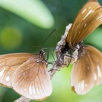 Бабочки.. :: Павел Путято
