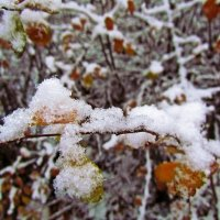еще не зима... :: Александр Корчемный