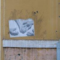 Яблоки на ... стене. :: Александр Степовой