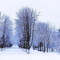 В зимнем парке :: Владимир Болдырев